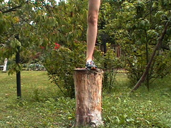 OUT ON A LIMB / ...AND THEN SHE SAID