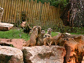 Zoo Suhl