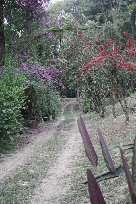 NATUREZA - Alameda das Primaveras