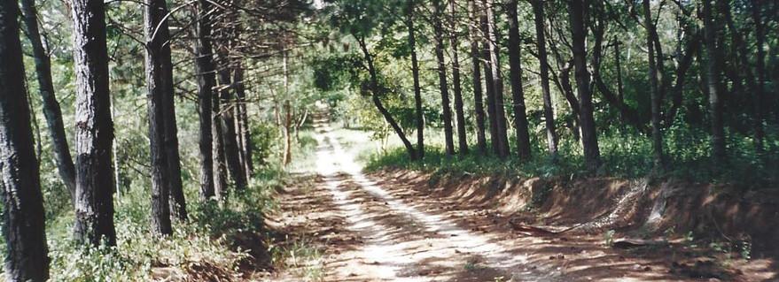 Estrada Municipal 1999.jpg