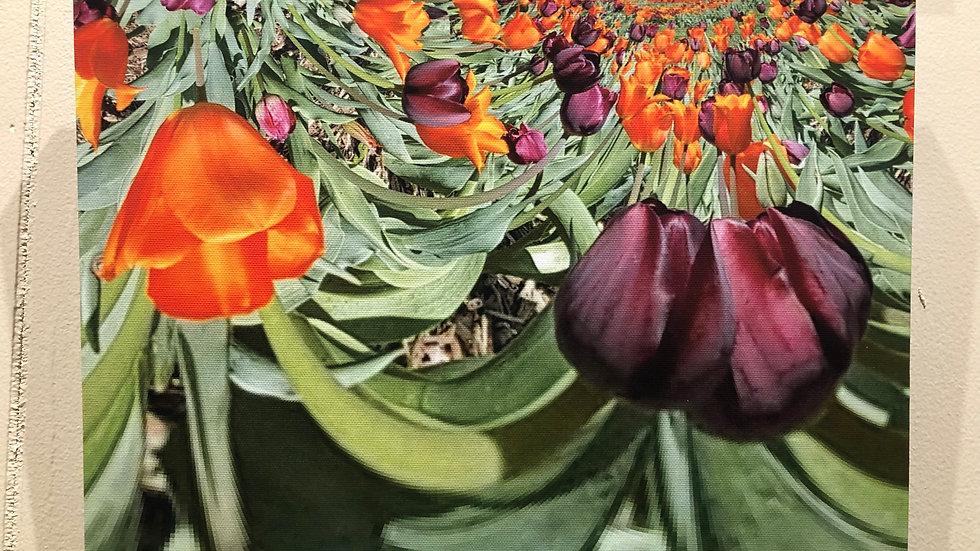 Virginia Tech Tulips by Samarth Swarup