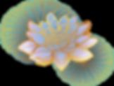 Lotus Oriental