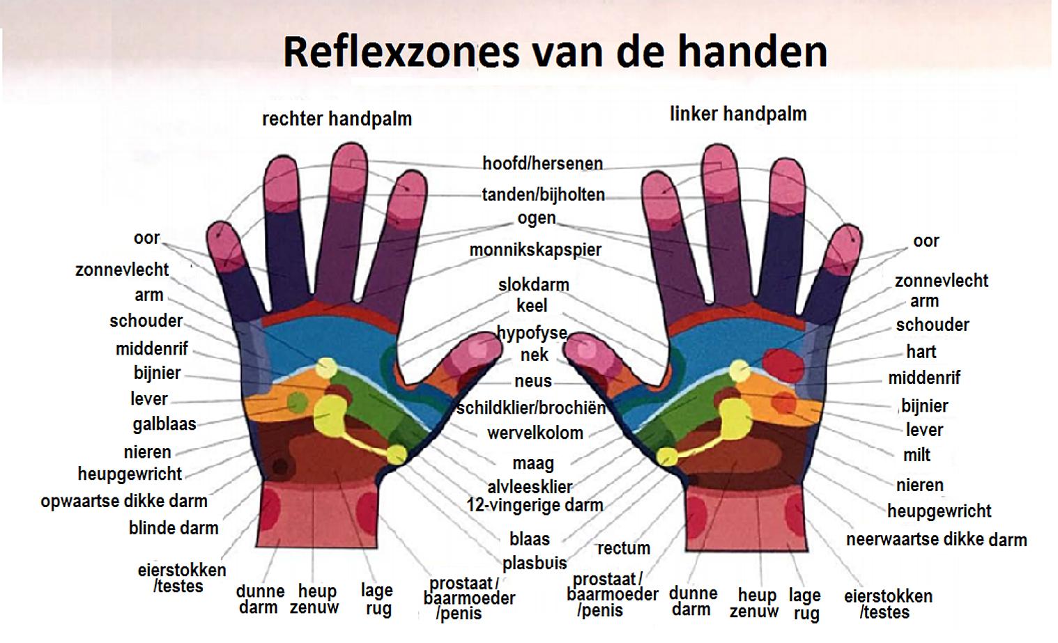 Wunderbar Harnwege Fakten Bilder - Anatomie Ideen - finotti.info