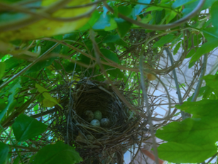 Poetry: Memory, The Robin's Nest & Birth