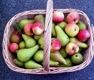 Poetry - Ian Stuart's 'Picking Pears' & 'Making the Fire'