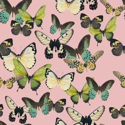 green butterfly LG W PINK BK