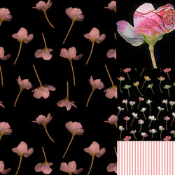 FALLING FLOWERS pink