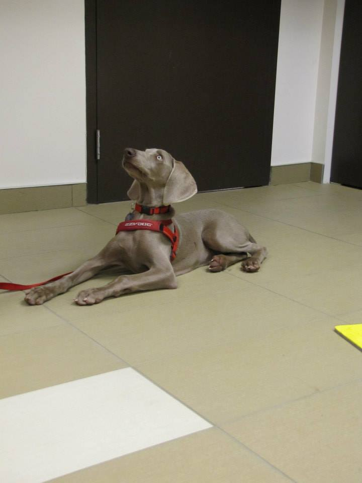 Éducateur canin rive-sud