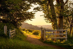Morning-in-countryside-Guildford-Surrey-