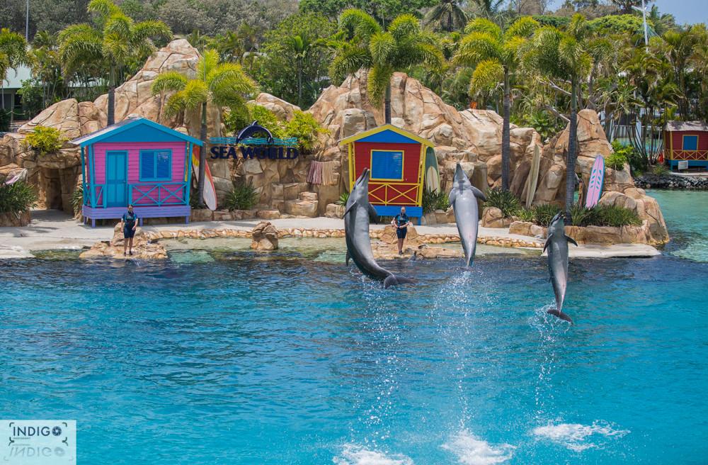 Seaworld Dolphin Beach - Gold Coast Aus