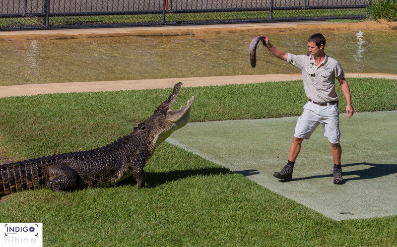 The croc Show at the Crocoseum