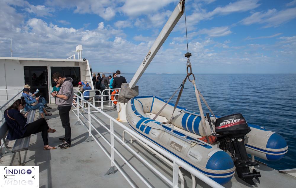 Sealink Cruise to Kangaroo island