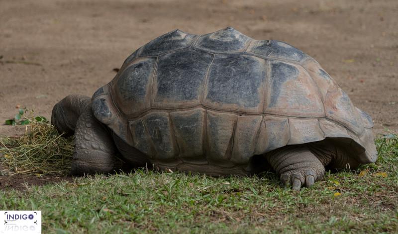 The Resident Tortoise