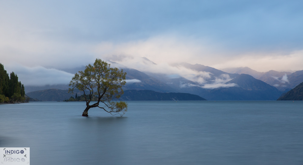 And that Wanaka Lone Tree