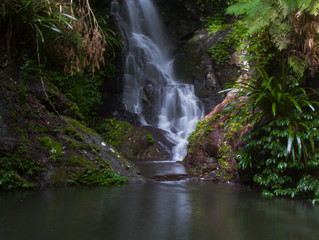 Gold Coast Hinterland - From Lamington to Springbrook National Park's