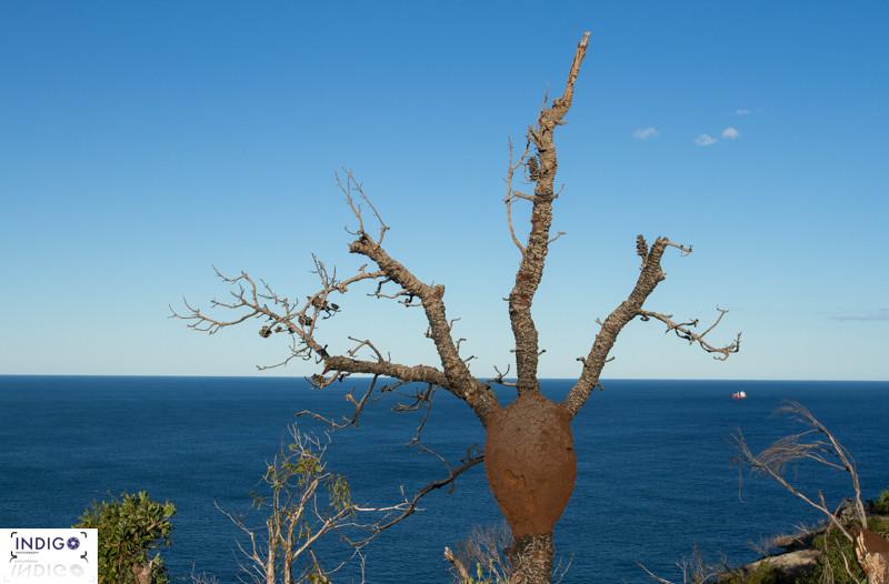 Barrenjoey Headland