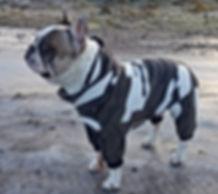 hundoveraller, fleeceoverall, hundkläder, overaller till hund