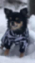 hundoveraller fleeceoveraller Chihuahua
