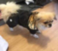 hundoveraller hundtäcke