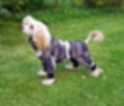 hundoveraller, fleeceoveraller, hundkläder, overaller till hund