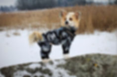 hundoveraller, hundkläder, overaller till hundar