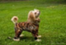 hundoveraller, fleeceoverall, hundkläder, fleeceoverall till hund
