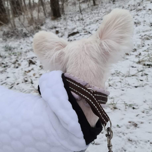 Nala håller sig varm i Vinterland