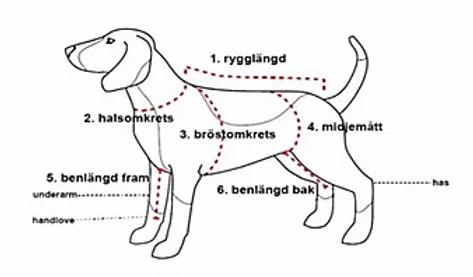 hur_man_mäter_en_hund.webp