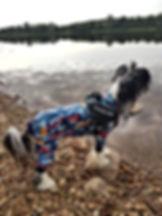 hundoveraller, hundkläder, overaller till hund