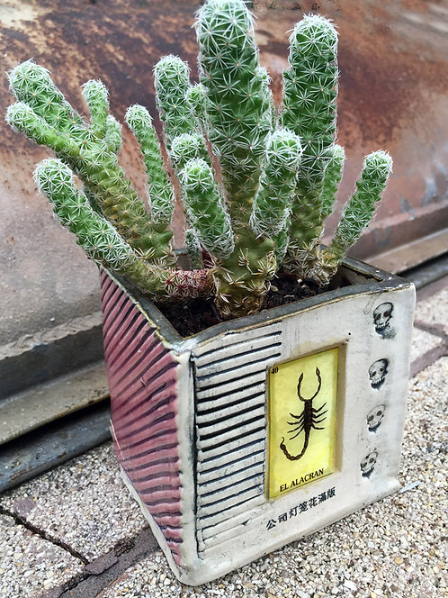 Lotería El Alacrán (the scorpion) Succulent Planter