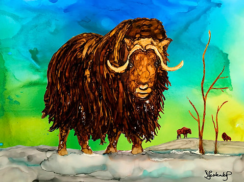 Musk Ox winter waterproof sticker