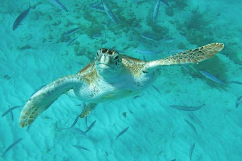 turtleblueviator.jpg