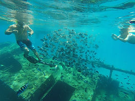 Glass Bottom Boat Barbados Shipwreck