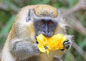 monkeymango.jpg
