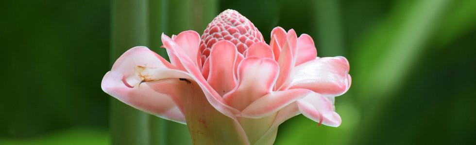 PinkFlower.jpg