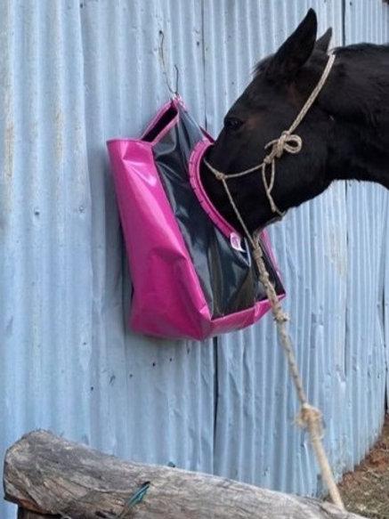 Hanging Horse Feeder