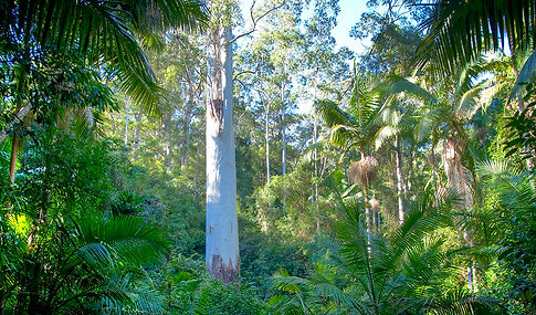 Myall Coast Tours operates in the Myall Lakes National Park
