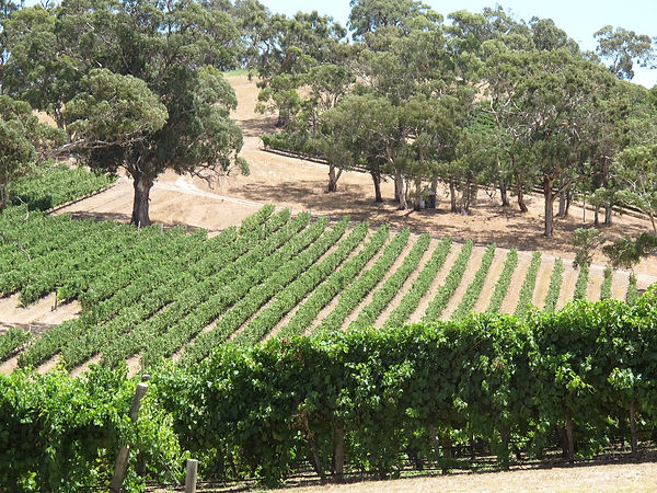 Myall Coast Tours private wine tours vinyard