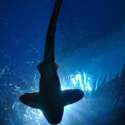 shark-164899_1280.jpg