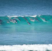 Magic dolphin shot Glen Henry.jpg