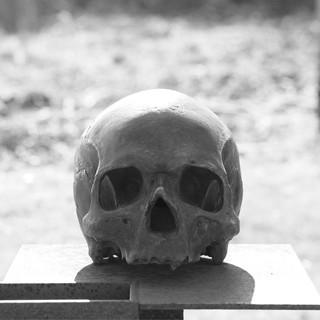 skull-2284177_1920.jpg