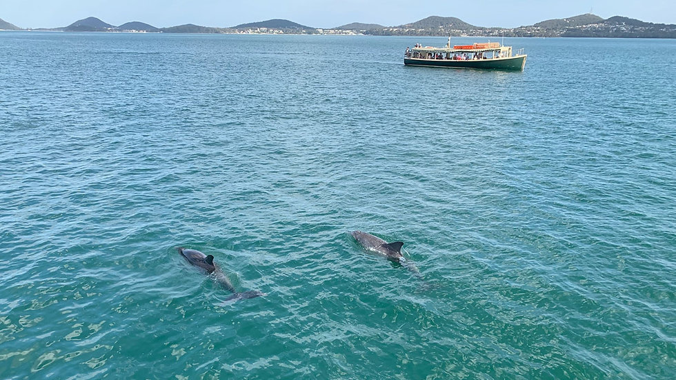 Myall Coast Tours Nelson Bay dolphin ferry cruise