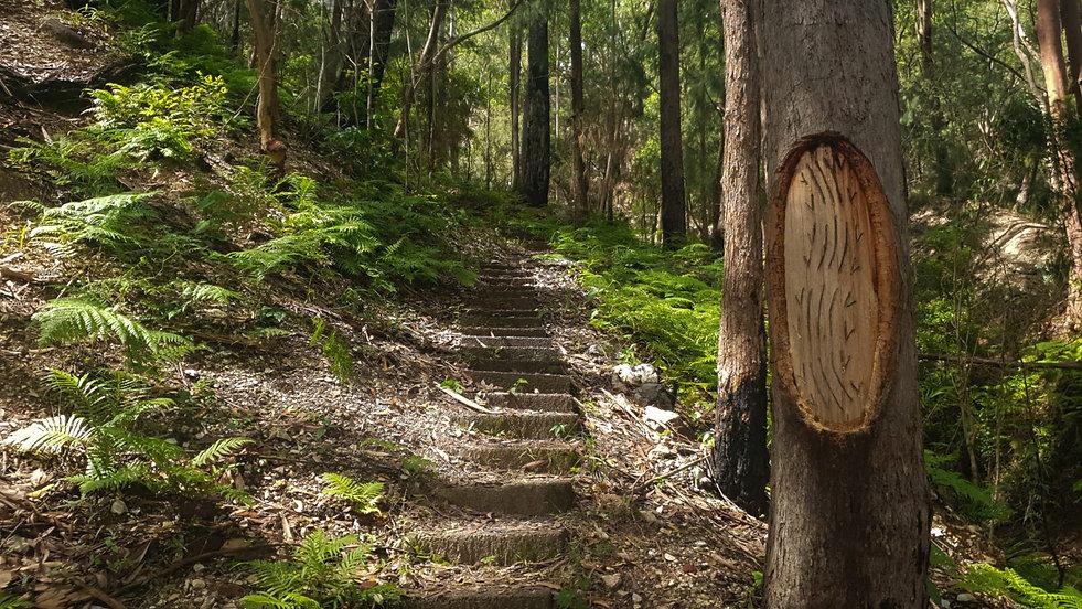 Myall Coast Tours Bulahdelah Alum Mountain ancient coastal forest guided eco hike