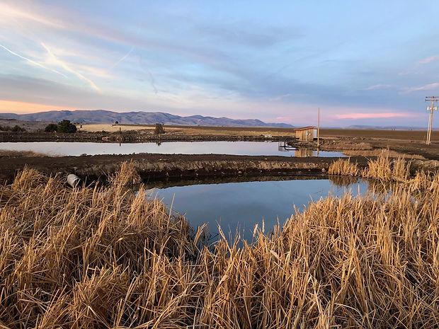 sediment catchment pond 2-min.jpg