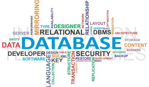 Database management companies
