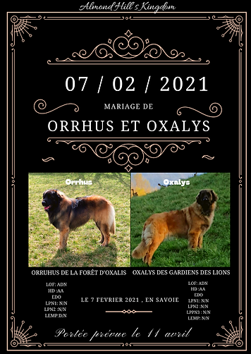 chien mariage.png