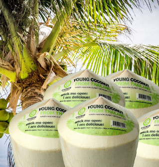 Verse Jonge Kokosnoot