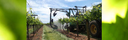 Table Grapes Spray Systems
