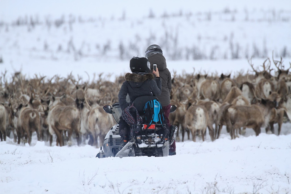 Arctic Reindeer Signatur Package - Tundra North Tours