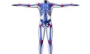 Articolazioni e ossa.jpeg